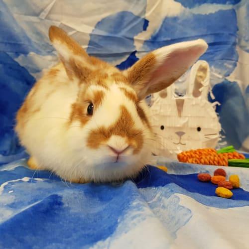 Niko -  Rabbit