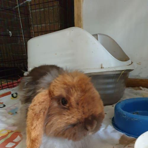 Rocky -  Rabbit