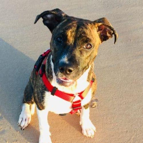 Bonita - Mixed Breed Dog