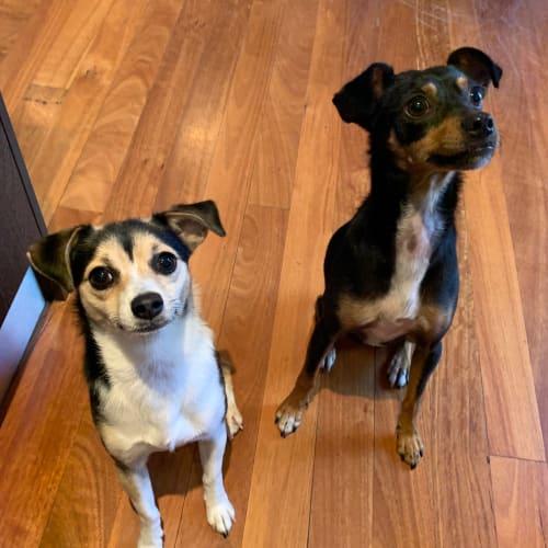 Roku & Atara - Mixed Breed Dog