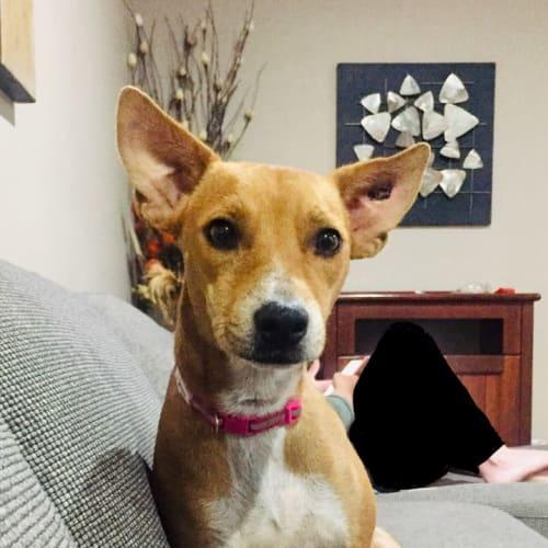 Honey - Mixed Breed Dog