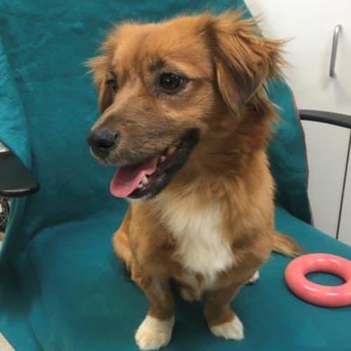 Holly 930176 - Dachshund Dog
