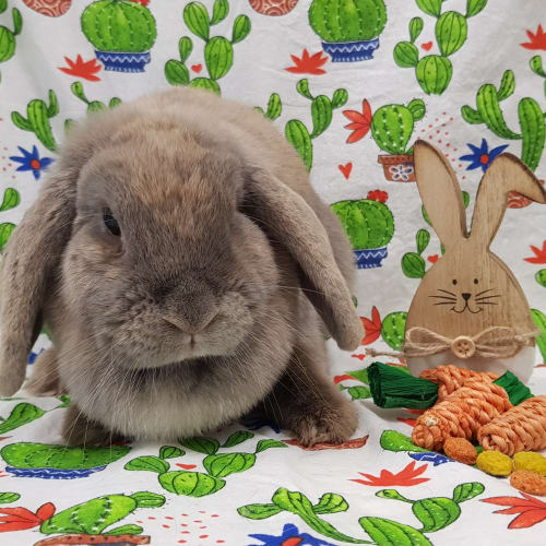Dewberry -  Rabbit