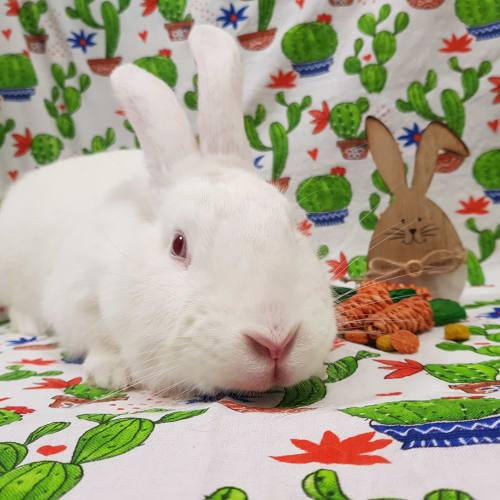 Mira -  Rabbit