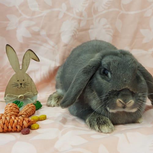 Chanel -  Rabbit