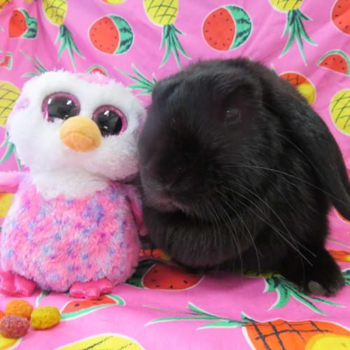 Ember -  Rabbit