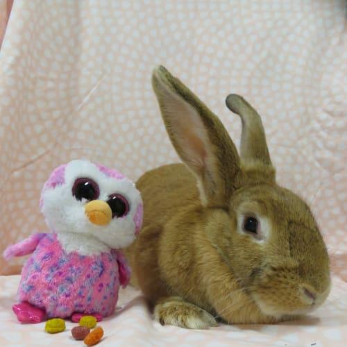 Zena -  Rabbit