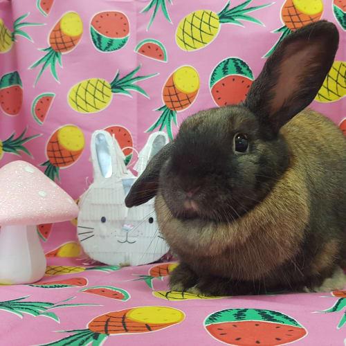 Marshmallow -  Rabbit