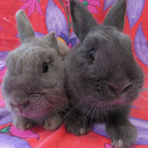 Terror & Murphy -  Rabbit