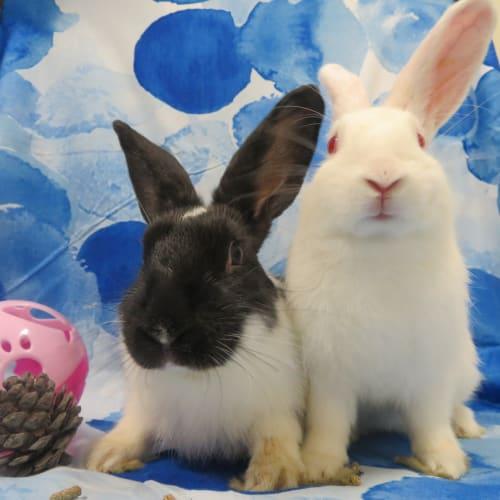 Hector & Harmony -  Rabbit