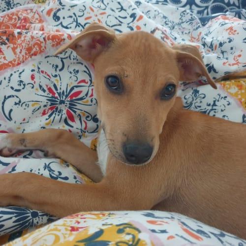 Harriett - Mixed Breed Dog