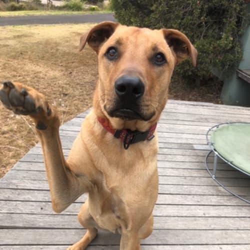 Luke - Mixed Breed Dog