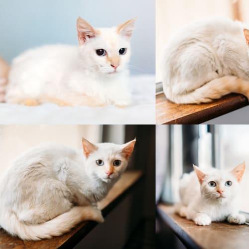 1360/1338 - Mia & Ivy - Domestic Medium Hair Cat