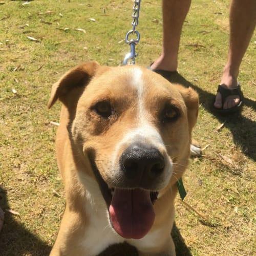 Tyson - Mixed Breed Dog