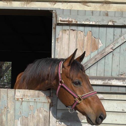 Companion horses -  Horse