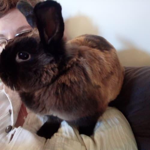 Lexi - Dwarf Rabbit