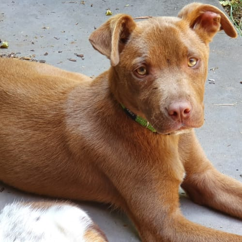 Ice Man - Mixed Breed Dog