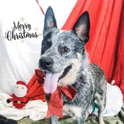 Micky - Mixed Breed Dog