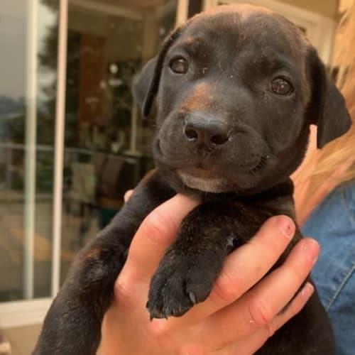 Thomas  - Mixed Breed Dog