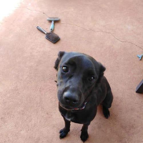 Jasmine - Mixed Breed Dog