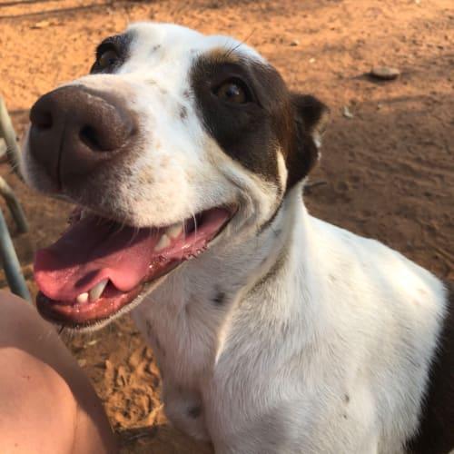 Bella - Mixed Breed Dog