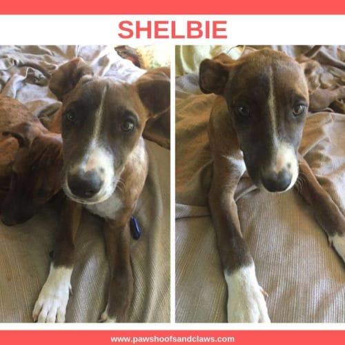 Shelbie - Mixed Dog