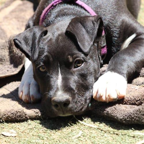 Rosie - Mixed Breed Dog