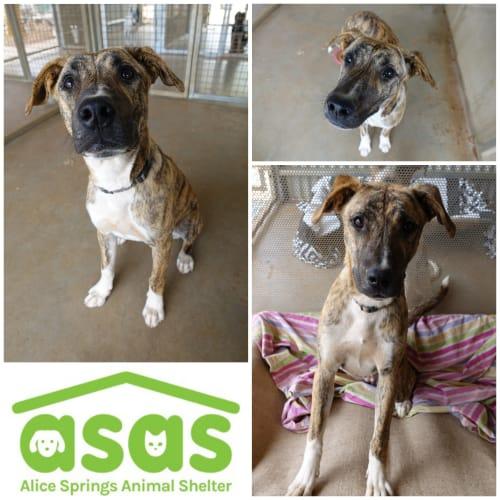 Sumatra DG19-567 - Mixed Breed Dog