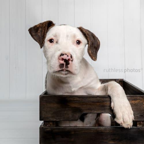Kinsella - Mixed Breed Dog