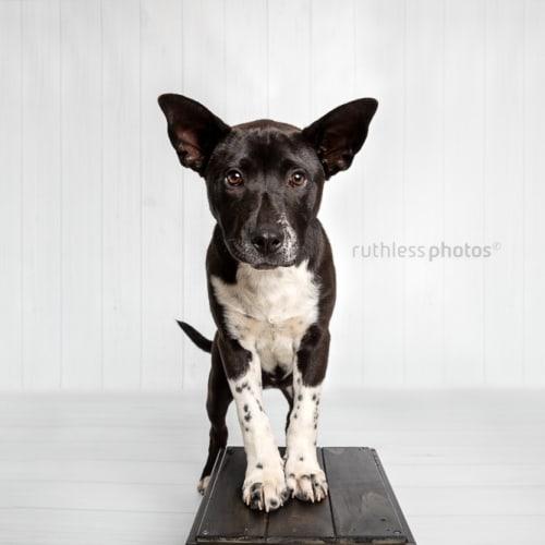 Innes - Mixed Breed Dog