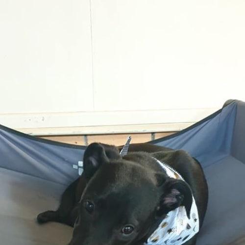 Busta - Cattle Dog