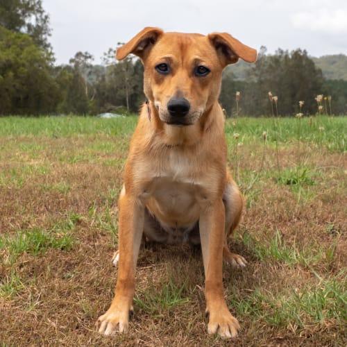 Buddha - Miniature Fox Terrier Dog
