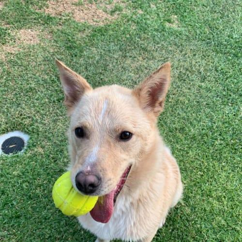 Gizmo with Jayde - Border Collie Dog