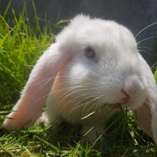 Sally (Now Ziggy) - Bunny Rabbit