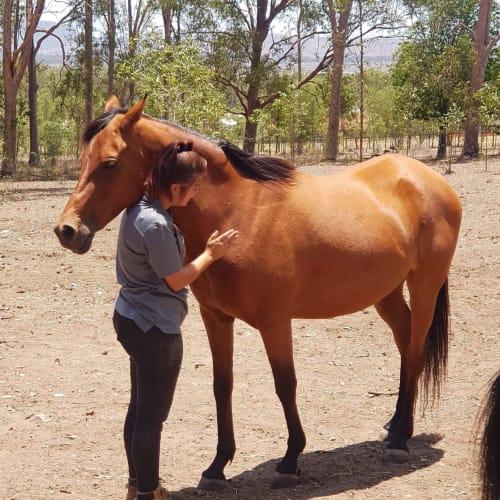 Asha  -  Horse