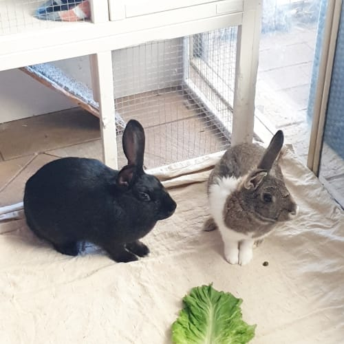 Squid & Top Deck - Domestic Rabbit