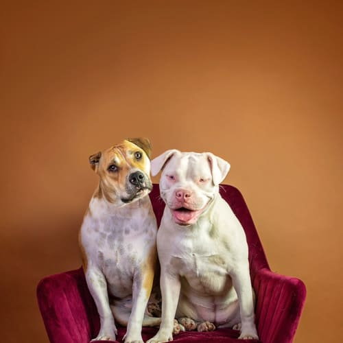 Marshal and Mallow  - British Bulldog
