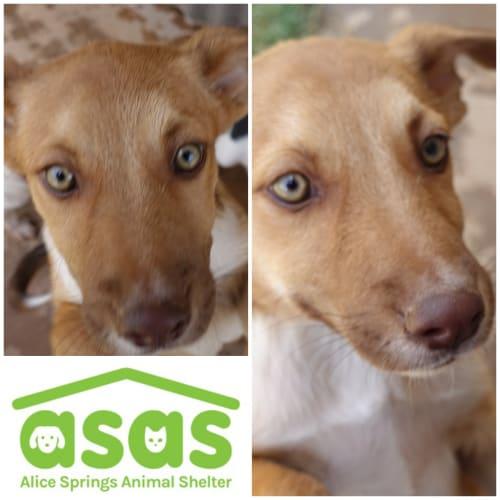 Tenika  DG19-588 - Siberian Husky x Mixed Breed Dog