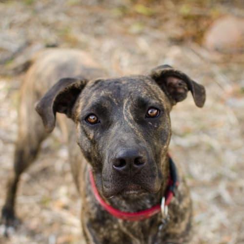 Dolly - Mixed Breed Dog