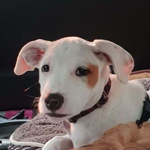 Peaches - Cross breed Dog
