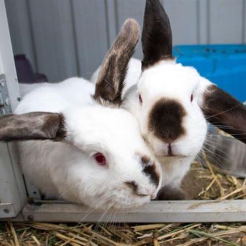 Fauna - Bunny Rabbit