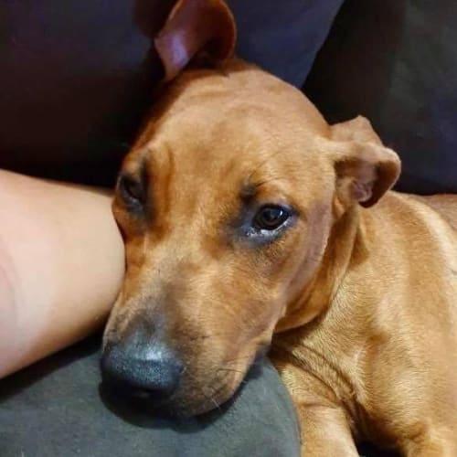 Baggins - Mixed Breed Dog
