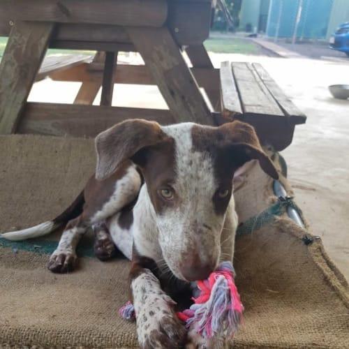 Perrito - Mixed Breed Dog
