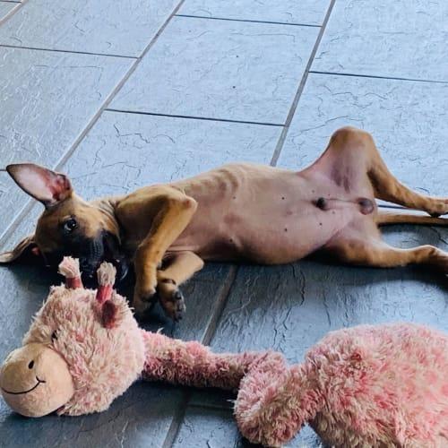 Timmy - Mixed Breed Dog