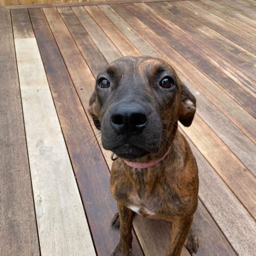 Link - Mixed Breed Dog