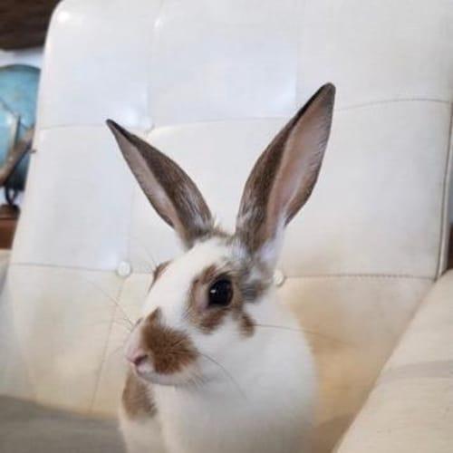 Mellow - Bunny Rabbit