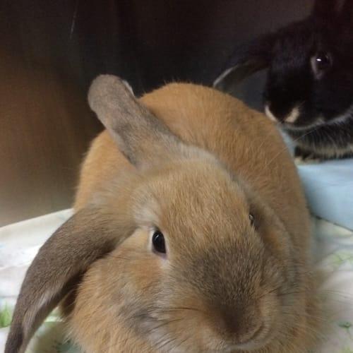 Parker - Dwarf Rabbit