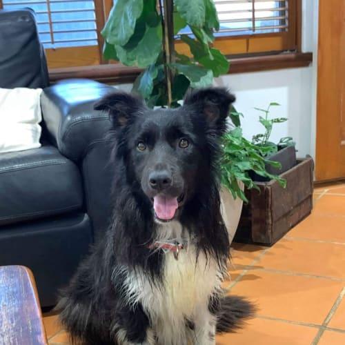 Gia with Kellie  - Border Collie Dog