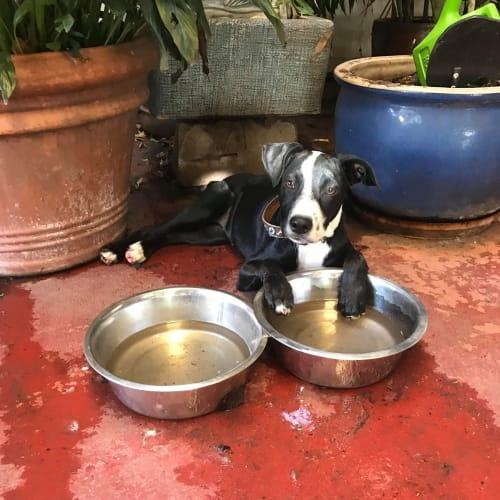 Lexi - Border Collie Dog