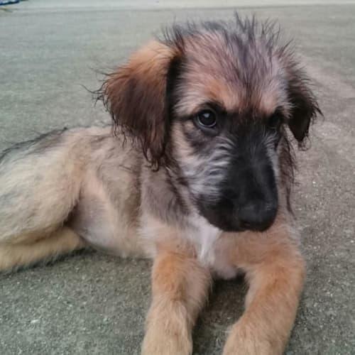 Wendy - Mixed Breed Dog